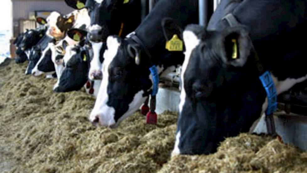 droogstandsrantsoen melkvee